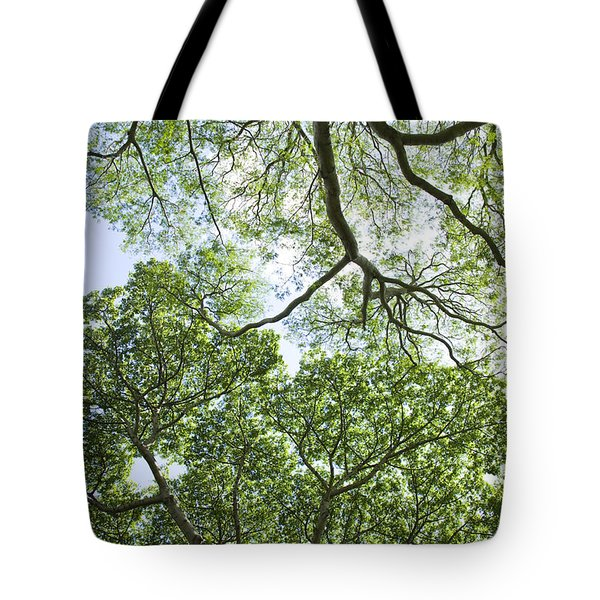 Tote Bag featuring the photograph Tree Canopies by Charmian Vistaunet