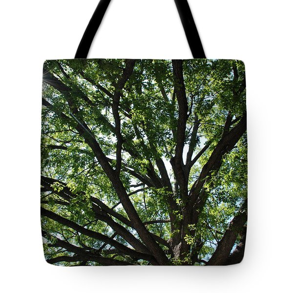 Tree Canopy Sunburst Tote Bag
