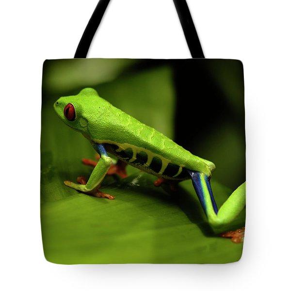 Tree Frog 12 Tote Bag by Bob Christopher