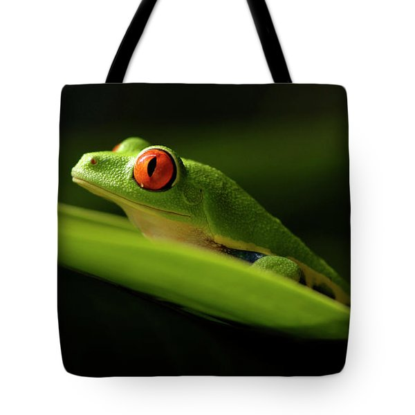 Tree Frog 7 Tote Bag by Bob Christopher