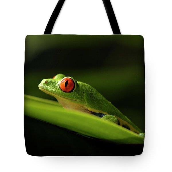Tree Frog 8 Tote Bag by Bob Christopher
