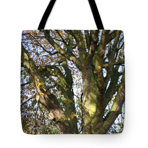 Tote Bag featuring the photograph Tree In Sunlight by Elizabeth Lock