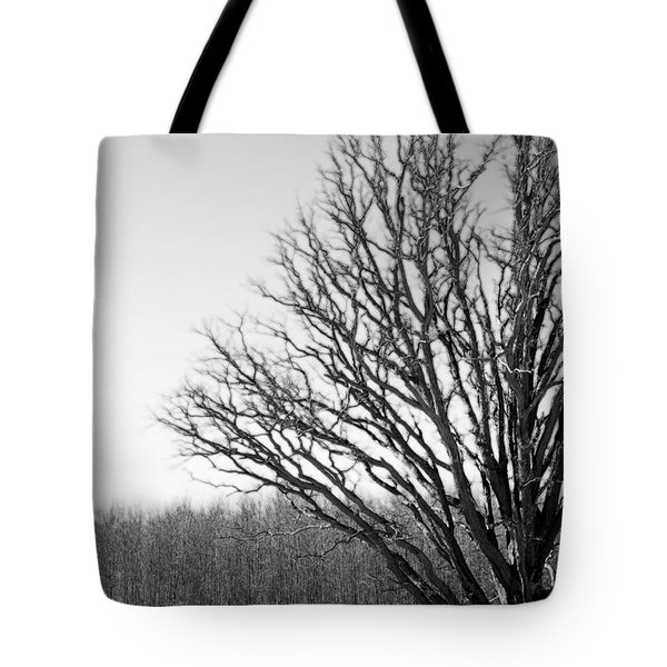Tree In Winter 2 Tote Bag