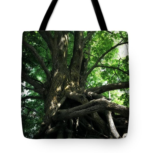 Tree On Pierce Stocking Scenic Drive Tote Bag by Michelle Calkins
