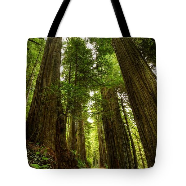 Tree Redwood Ca 3 Tote Bag by John Brueske