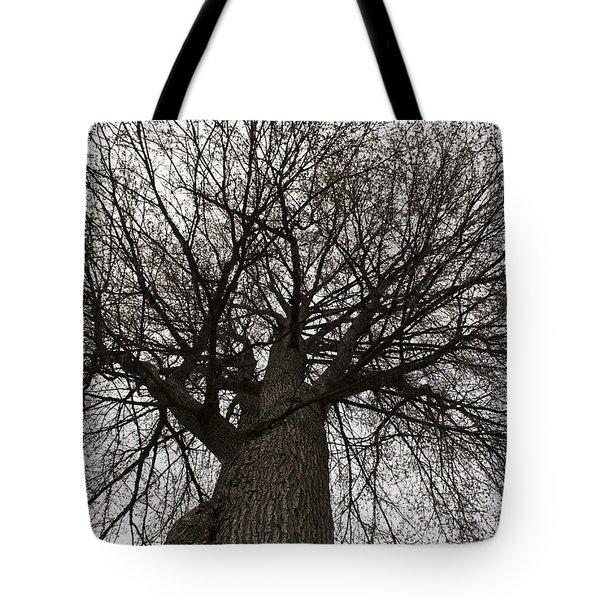 Tree Web Tote Bag
