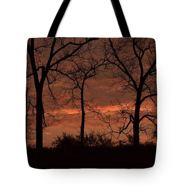 Trees At Sunrise Tote Bag