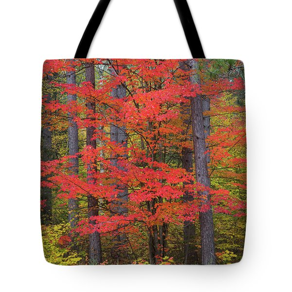 Trees In A Forest, Schoolcraft County Tote Bag