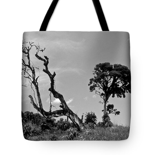 Tote Bag featuring the photograph Trees In Cloud Forest by Lana Enderle