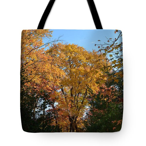 Trees In Fall Tote Bag