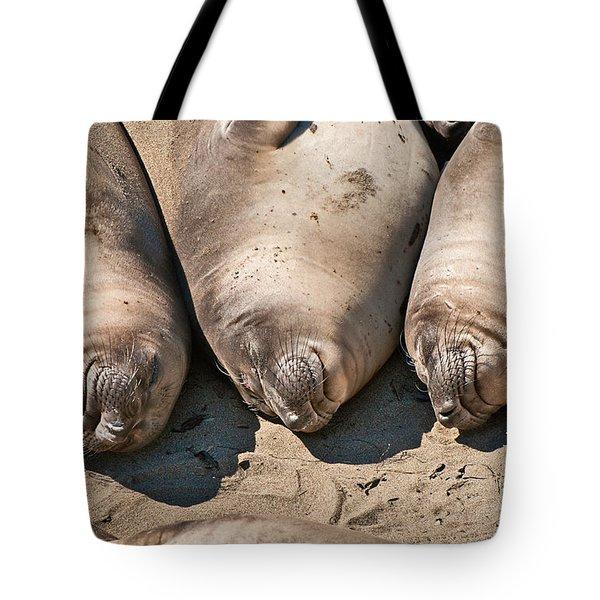 Trio Of Sleeping Northern Elephant Seals Mirounga Angustirostris At The Piedras Blancas Beach Tote Bag by Jamie Pham