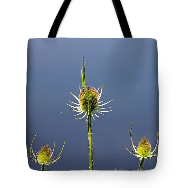 Trio Of Teasels Tote Bag