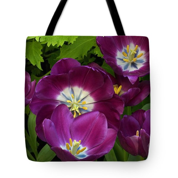 Triumph Tulips Negrita Variety Tote Bag