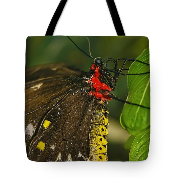 Tote Bag featuring the photograph Troides Helena Butterfly  by Olga Hamilton