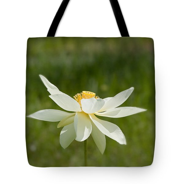 Tropical Lotus Flower Tote Bag by Kim Hojnacki