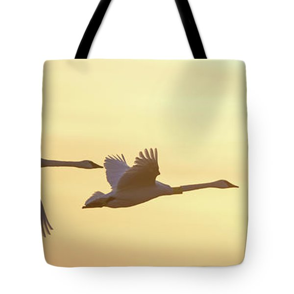 Trumpeter Swans In Flight At Sunset Tote Bag
