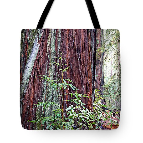 Trunk Of Coastal Redwood In Armstrong Redwoods State Preserve Near Guerneville-ca Tote Bag