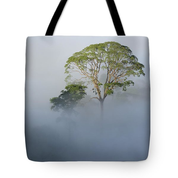 Tualang Tree Above Rainforest Mist Tote Bag