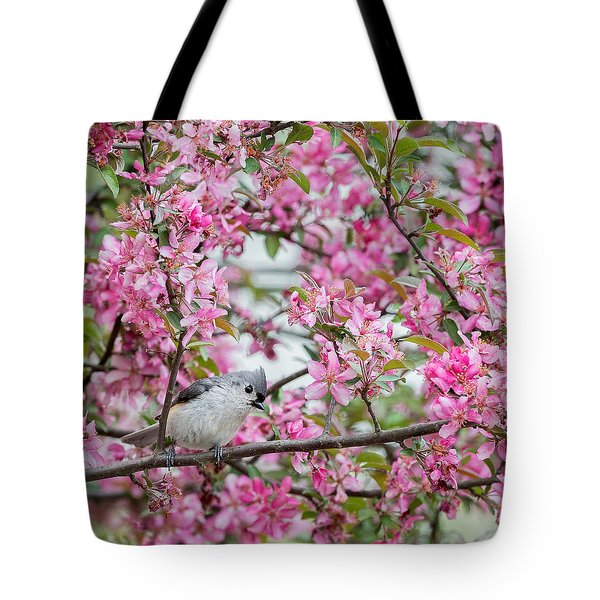 Tufted Titmouse In A Pear Tree Square Tote Bag