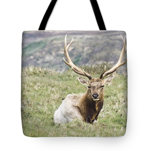 Tule Elk Bull Tote Bag by Priya Ghose