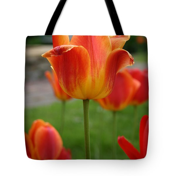 Tulip Collection Photo 1 Tote Bag
