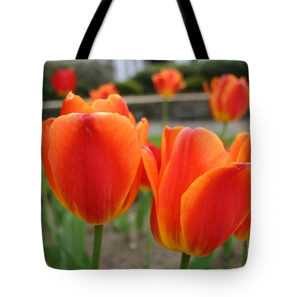 Tulip Collection Photo 2 Tote Bag