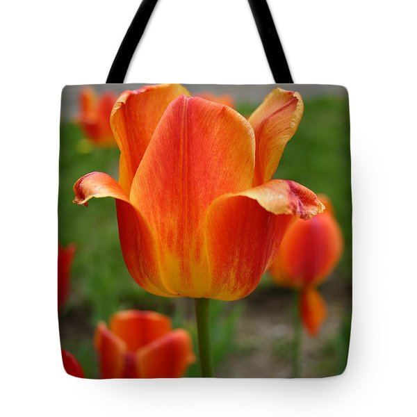 Tulip Collection Photo 4 Tote Bag
