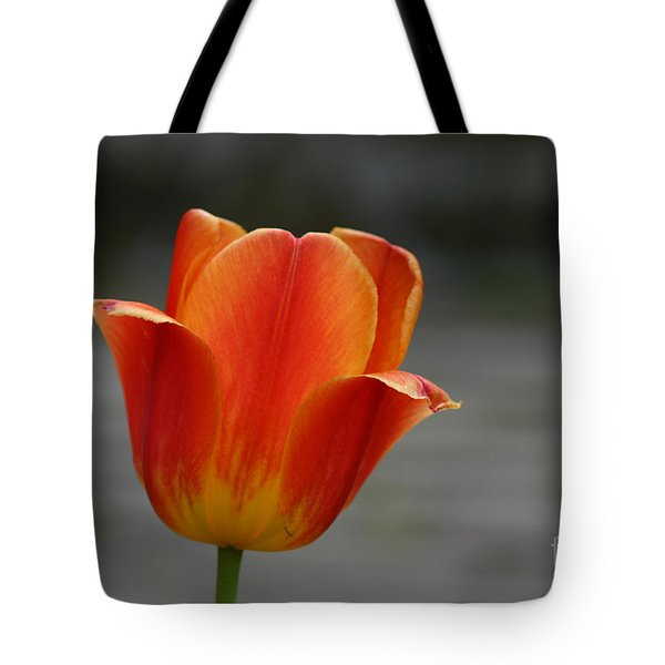 Tulip Collection Photo 5 Tote Bag