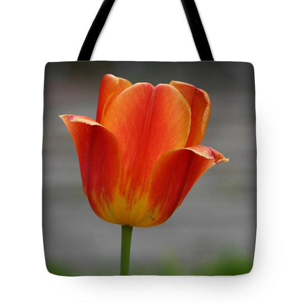 Tulip Collection Photo 6 Tote Bag