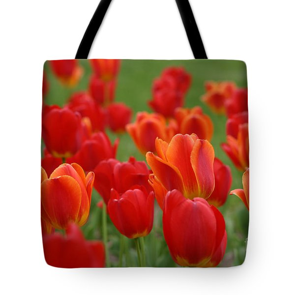 Tulip Collection Photo 7 Tote Bag