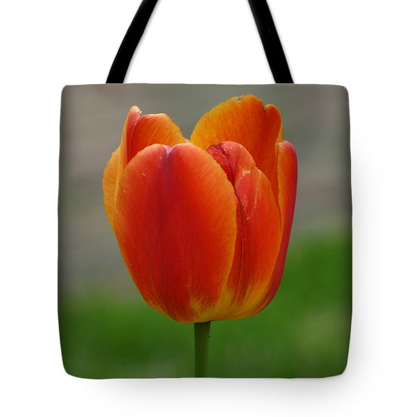 Tulip Collection Photo 8 Tote Bag