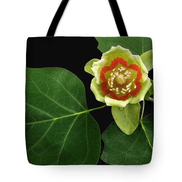 Tulip Bloom Tote Bag by Don Spenner