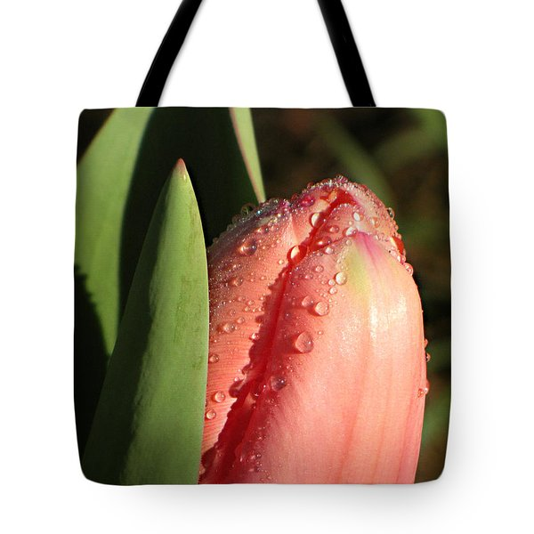 Tote Bag featuring the photograph Tulip In Morning Sun by Katie Wing Vigil