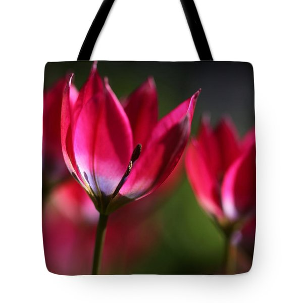 Tote Bag featuring the photograph Tulips by Annie Snel