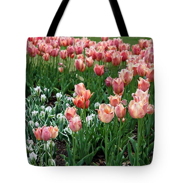 Tulips Galore  Tote Bag by Suzanne Gaff