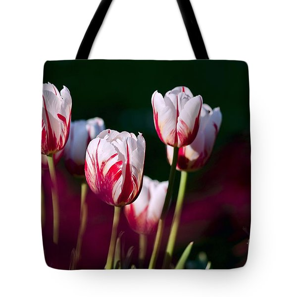 Tote Bag featuring the photograph Tulips Garden Flowers Color Spring Nature by Paul Fearn