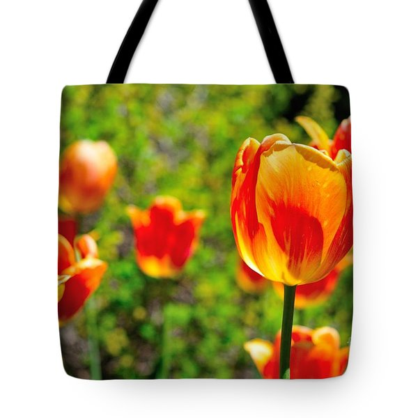 Tote Bag featuring the photograph Tulips by Joe  Ng