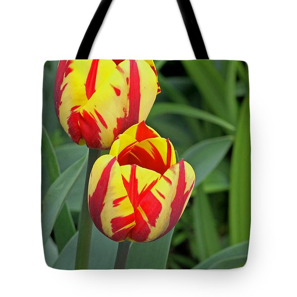 Tulips Tote Bag by Tony Murtagh