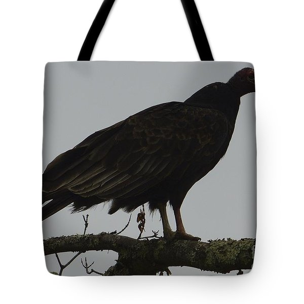 Turkey Vulture Tote Bag by Randy Bodkins