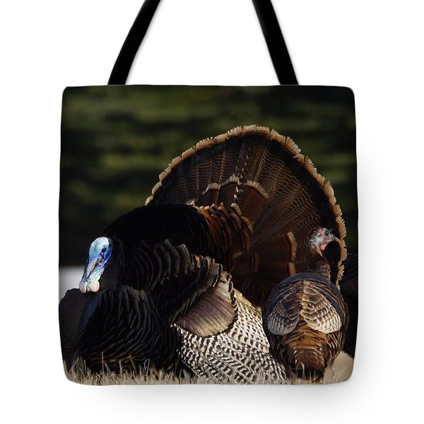 Tote Bag featuring the photograph Turkey's by Steven Clipperton