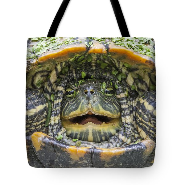 Turtle Covered With Duckweed Tote Bag