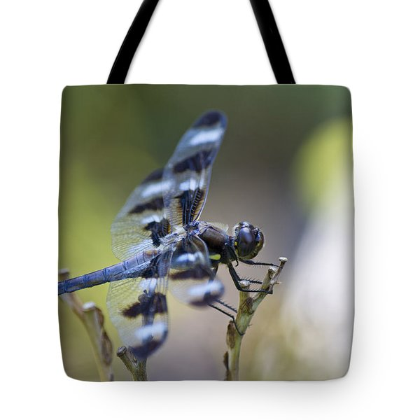 Twelve Spot Hanging Out Tote Bag by Shelly Gunderson