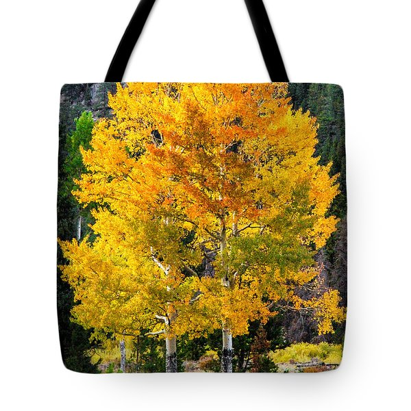 Twin Fall Trees Tote Bag