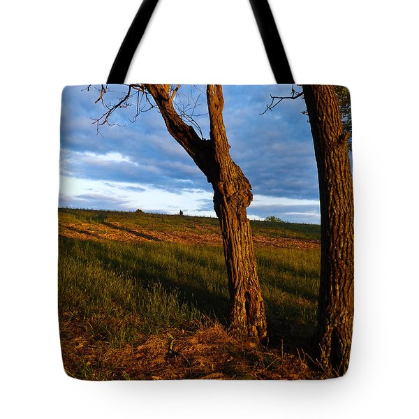 Twisted Tree Tote Bag