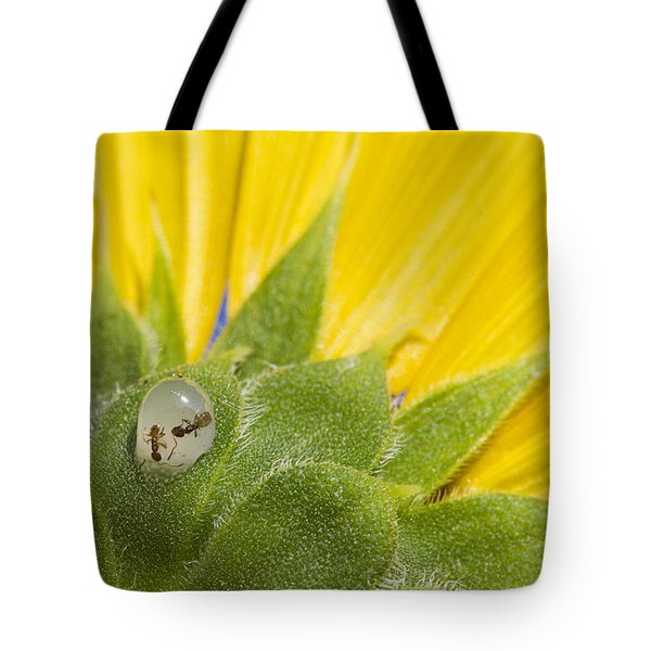 Two Ants Entombed In Sunflower Resin Tote Bag