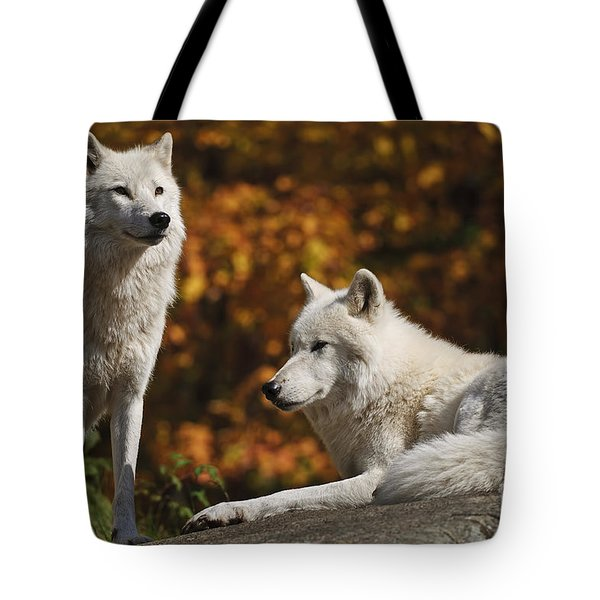 Tote Bag featuring the photograph Two Arctic Wolves On Rock Hill by Wolves Only