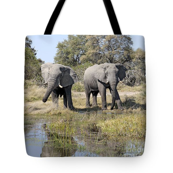 Tote Bag featuring the photograph Two Male Elephants Okavango Delta by Liz Leyden