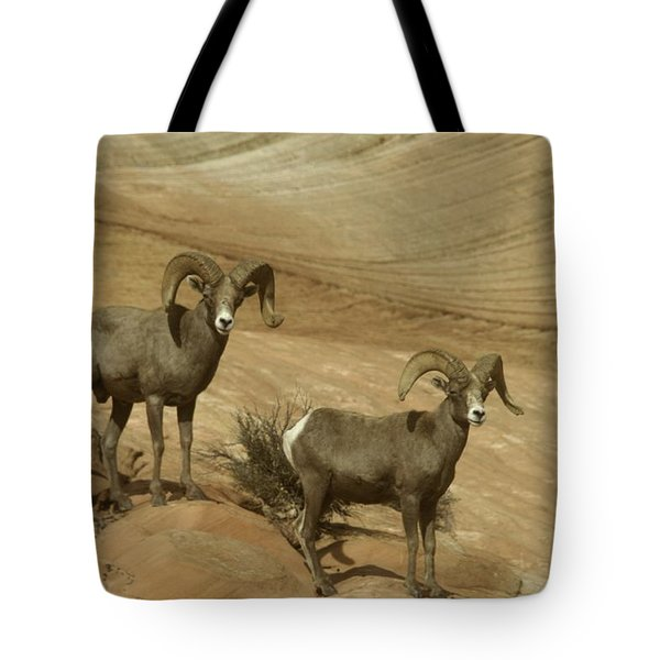Two Male Rams At Zion Tote Bag by Jeff Swan