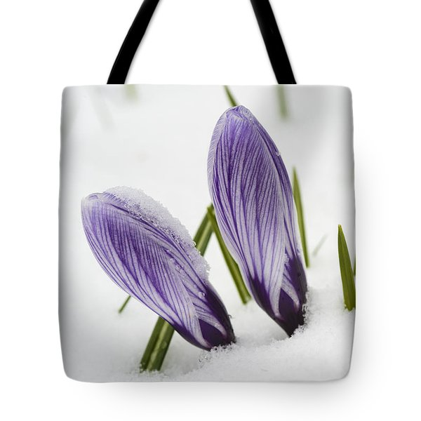 Two Purple Crocuses In Spring With Snow Tote Bag