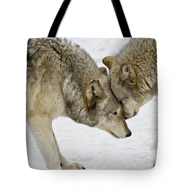 Two Wolves In  A Staredown Tote Bag